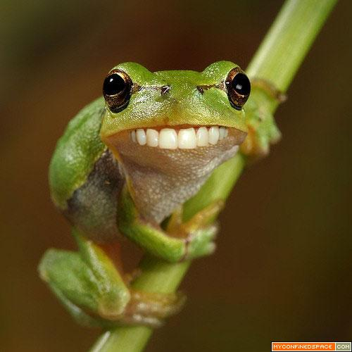 All Funny,Cute,Cool and Amazing Animals: Funny Frogs ...