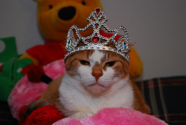 Feline Royalty by Photography By Shaeree from flickr (CC-NC-ND)