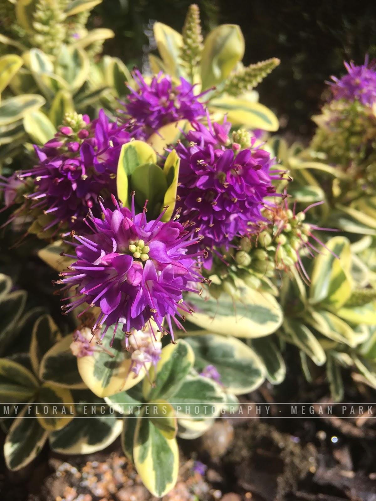 Floral Encounters
