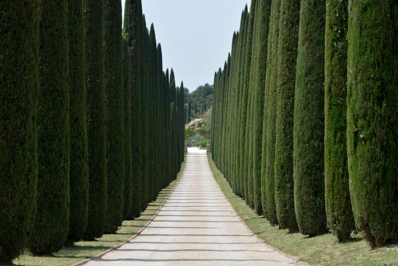 Fila de cipreses en la entrada de un palacete toscano