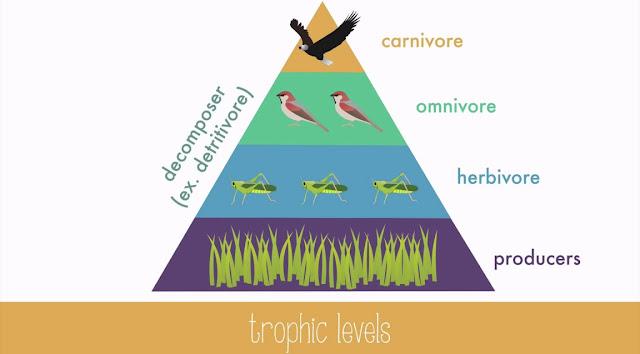 Niveles troficos y ecosistema