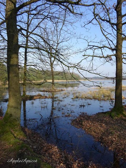 Utrechtse Heuvelrug by AppleApricot