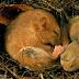 Hibernation makes animals become inactive