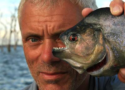 black piranha situslakalaka 9 Monster Sungai Yang Masih Ada Hingga Saat Ini