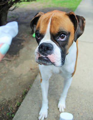 Is Boric Acid Safe For Dogs Eyes