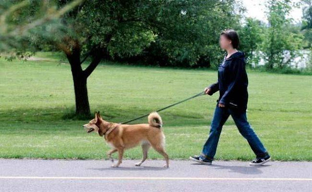 यहां पालतू कुत्ते को रोजाना न घुमाने पर लगता है भारी भरकम जुर्माना - newsonfloor.com