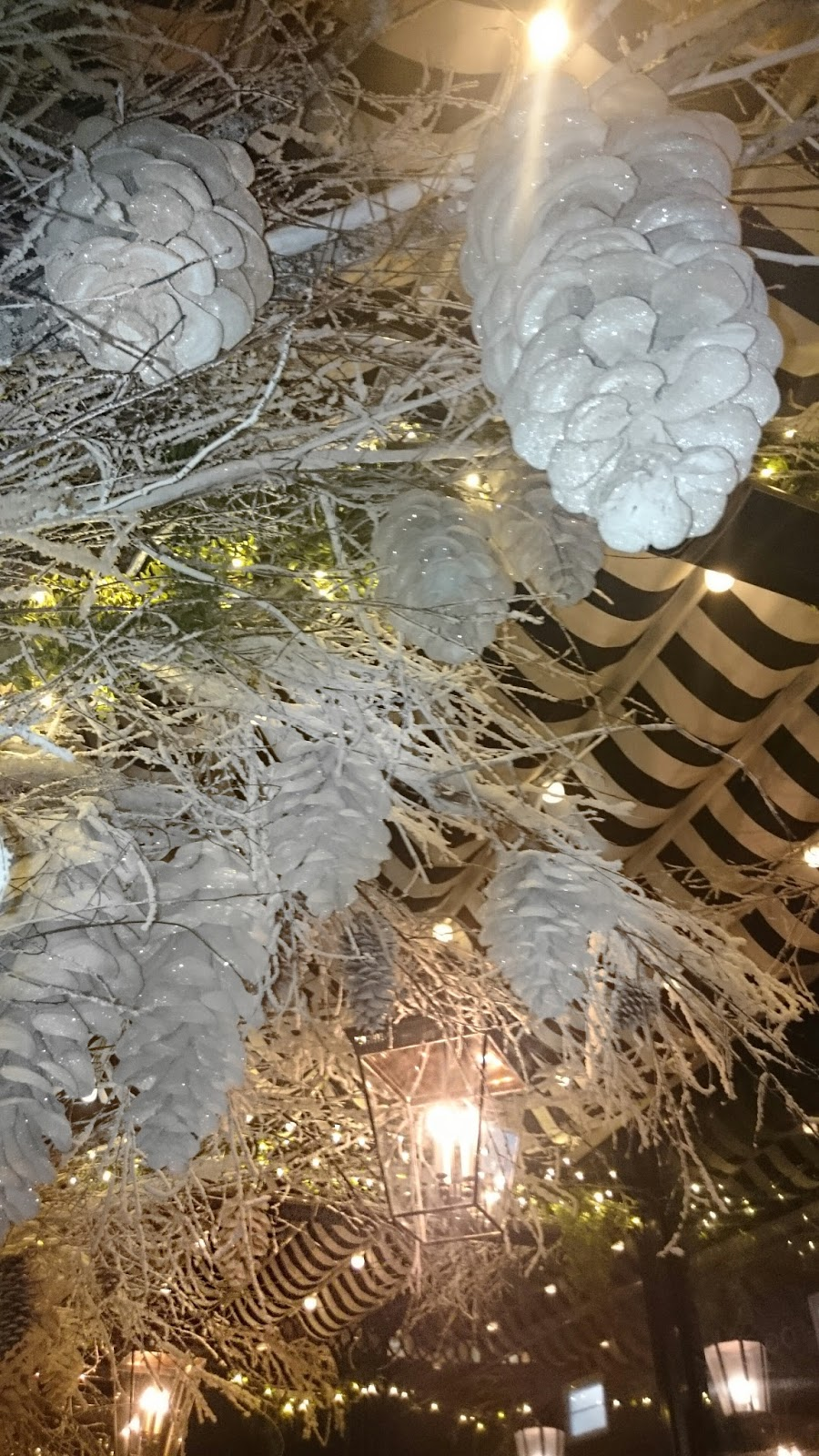 winter white pine cones