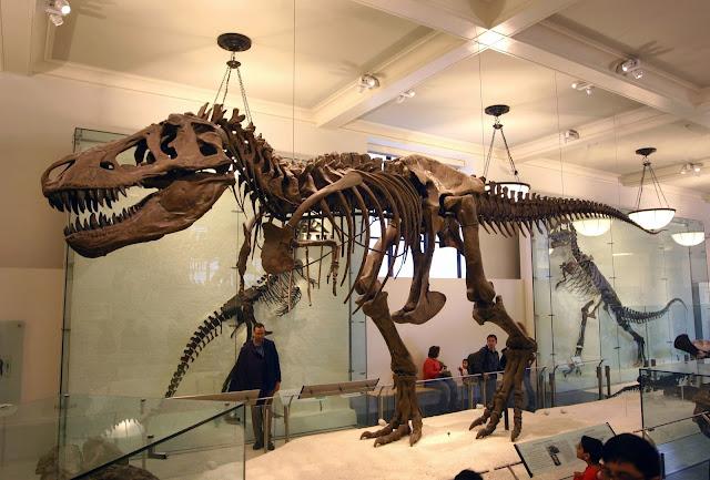 ¿Cuánto cuesta un esqueleto de dinosaurio?