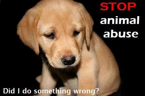 Animal Cruelty Statistics