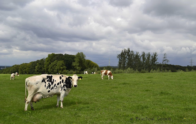 Black and white cow in green field