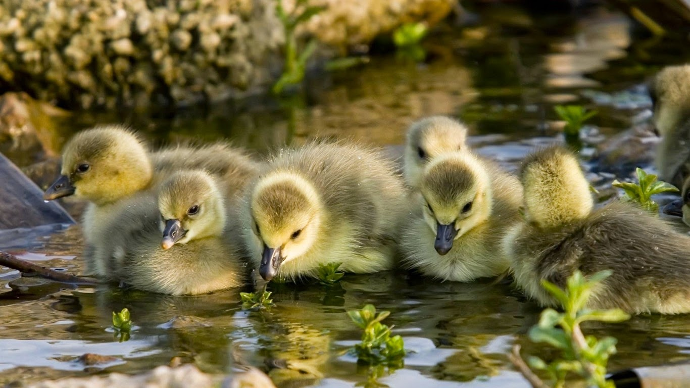 Baby Animal Pictures 2015 Animal Wallpapers HD Images Free ...