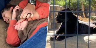 Γυναίκα πήδηξε στο κλουβί του τζάγκουαρ για να βγάλει... selfie (Βίντεο)