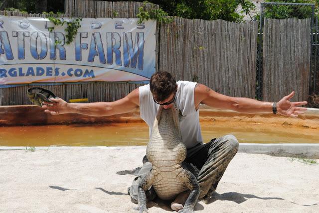 alligator worstelen