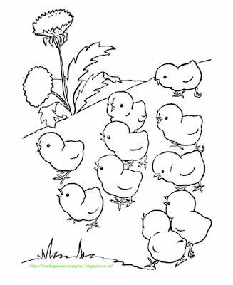 Gambar Mewarnai Ayam - 13