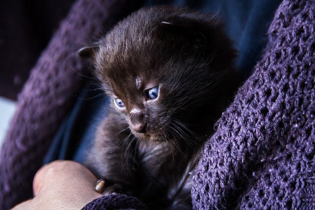 Gatito... imprescindible para hacer buenas fotos ;)