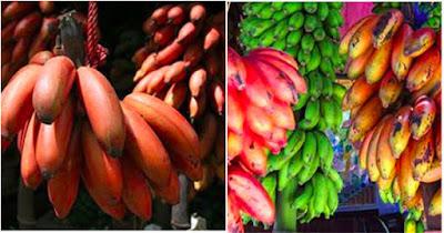 pisang_merah