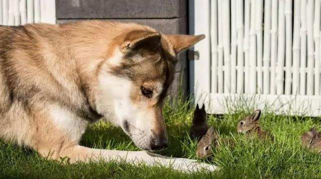 Do Dogs Groom Each Other