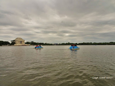 Paddle boats on Washington DC's Tidal Basin
