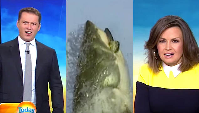 News Anchors Stefanovic and Wilkinson speechless in horror after a news segment about sharks