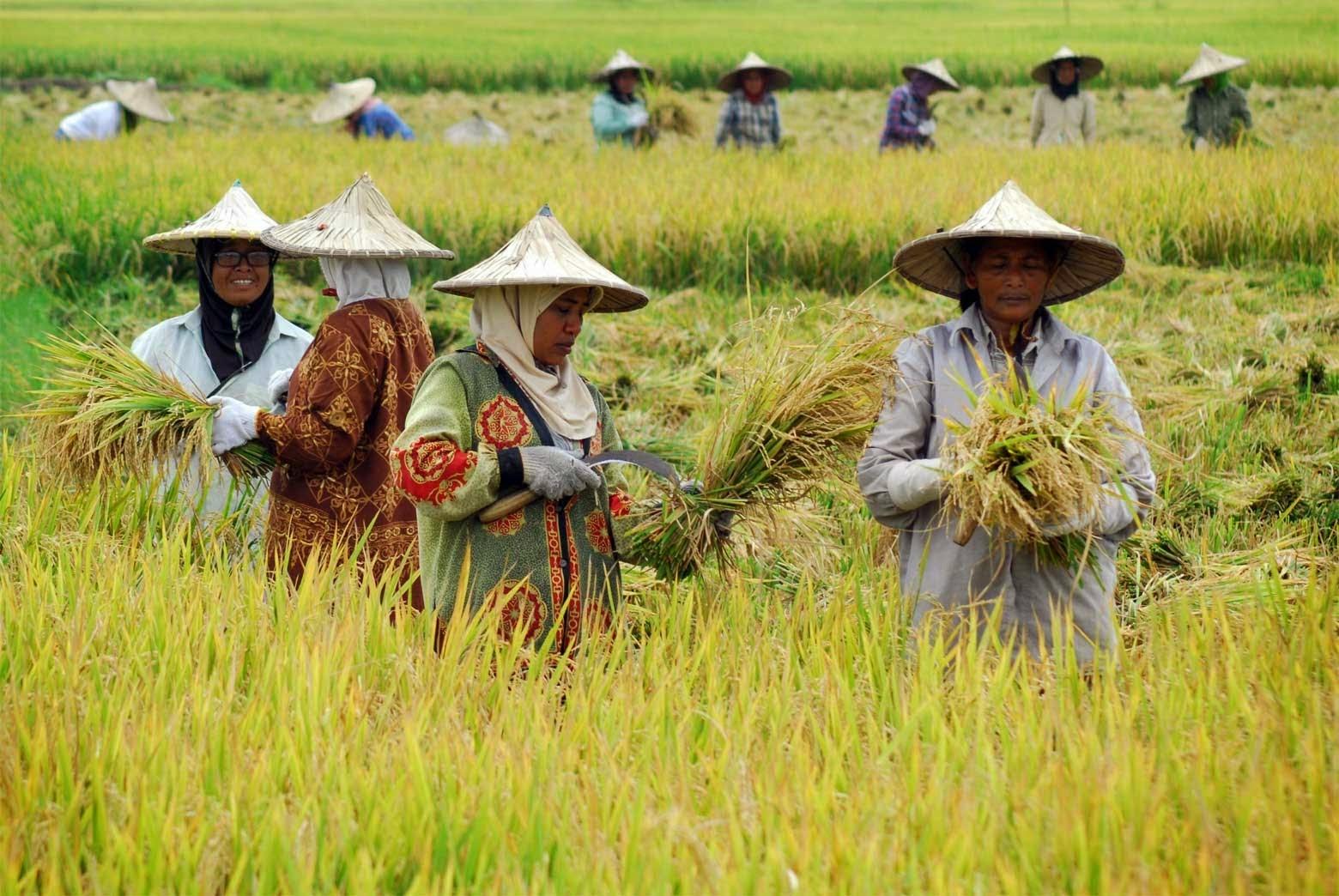 Kelembagaan Ekonomi Pertanian Petani Berdasi Gambar Kerja