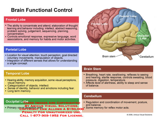 frontal lobe functioning and its relationship to cognition in psychology