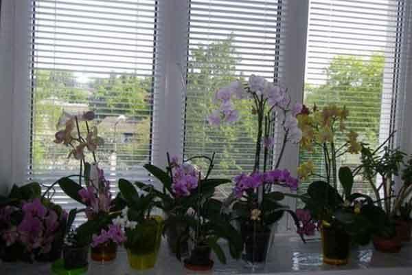 cum sa ingrijesti orhideele