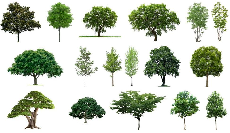 Full Hd Tree Png Free Download Picsart Png Zone