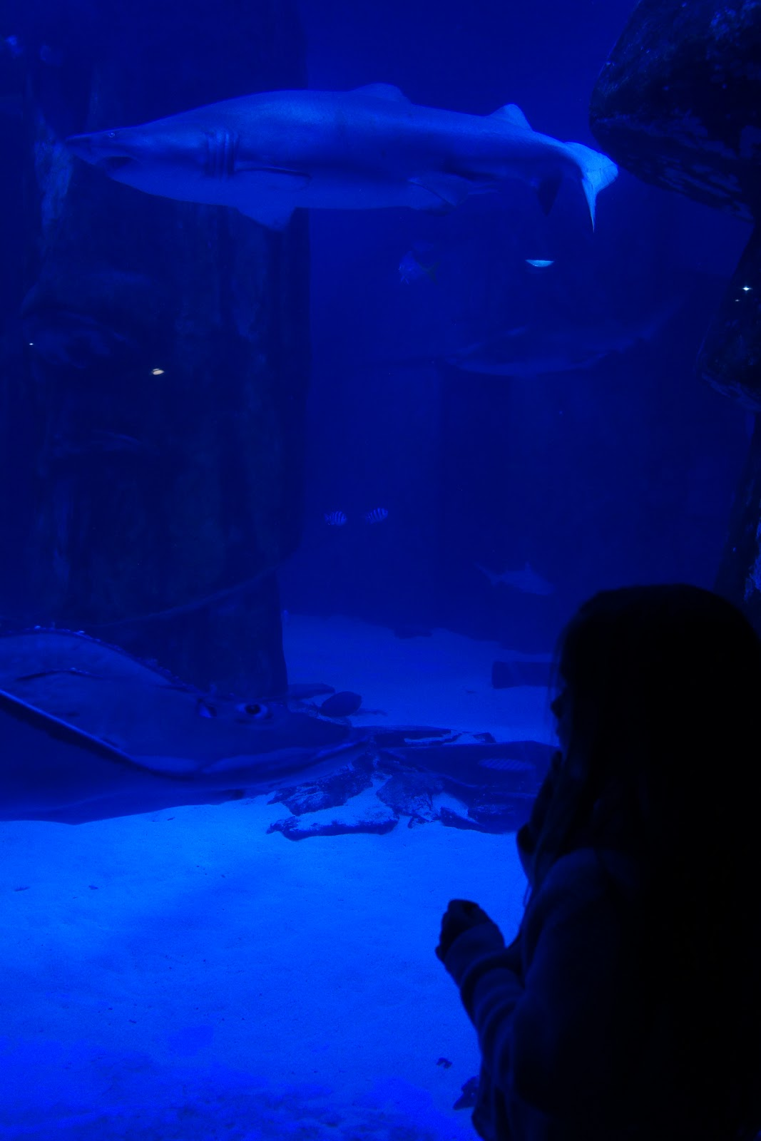 London Aquarium - review and top tips for visiting