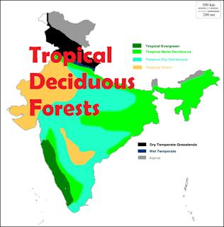 Tropical Deciduous Forests: Natural Vegetation & Wildlife