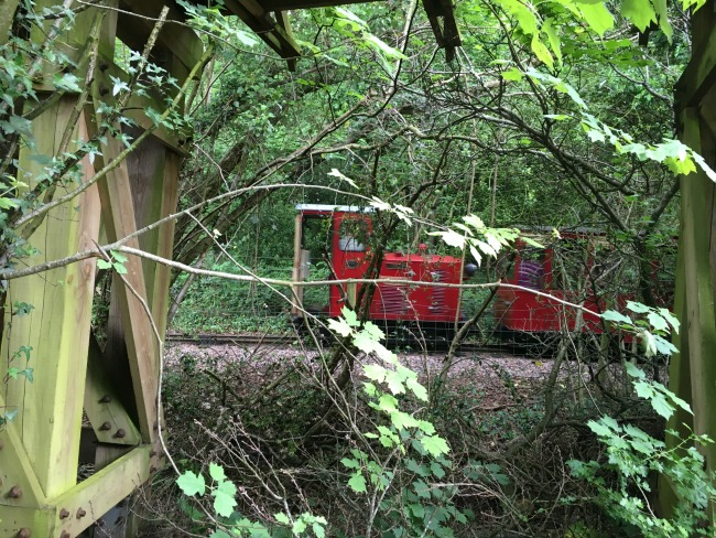 red-train-through-trees-at--Perrygrove-Railway
