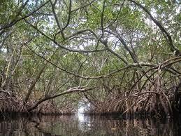 wisata mangrove belitung