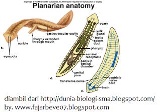 Viermi de tip viermi umani, Programează-te la doctor, Arată tot felul de viermi