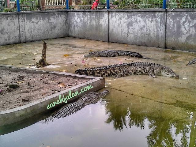 Mini Zoo Kijang