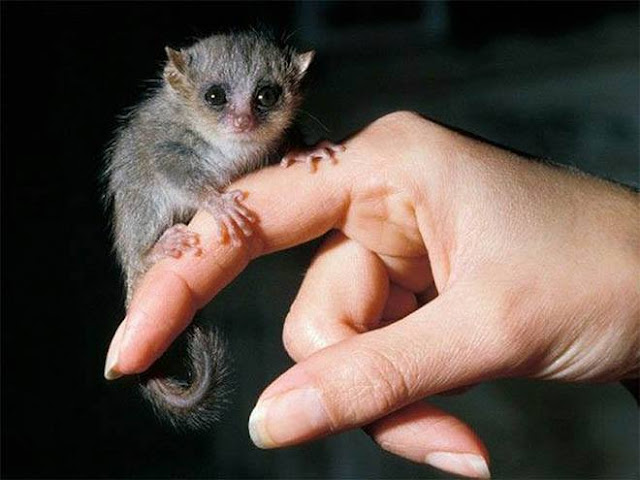 اصغر 13 حيواناً فى العالم لن تصدق أنها موجدة بالفعل