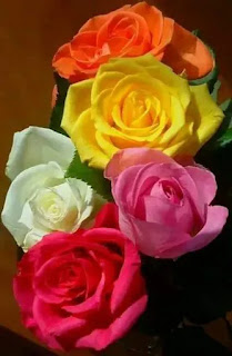 Roses in All Colours Roses in Multicolours Multicolour Roses Beautiful Roses