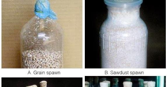 Star Mushroom Products: Three Factors of Mushroom Cultivation