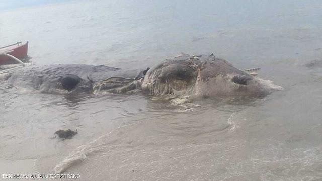 بالصور- رعب في الفلبين بسبب عملاق بحري ضخم!