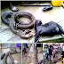 Woman shares photos of huge snake killed in her neighbourhood (Graphic content)