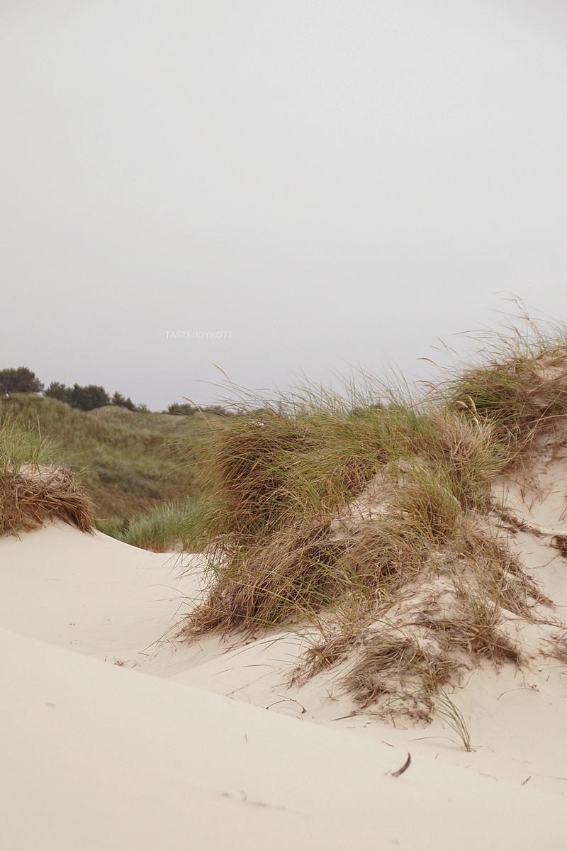 Amrum Aussichtsdüne Dünengras Strand