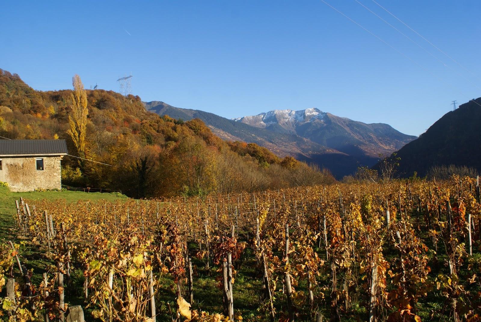 automne savoie feuilles nature vignes vue montagne