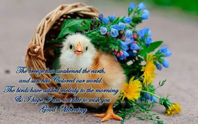 good-morning-bird-quotes-and-images-for-facebook