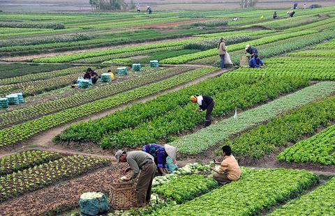 Pengertian AGRARIS, Apakah Agraris itu dan Apa Contohnya