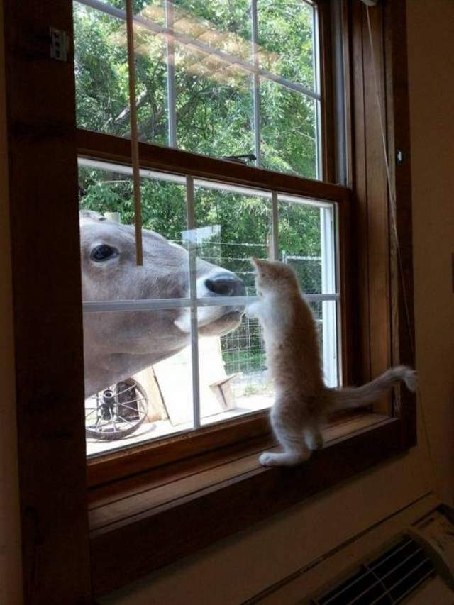 Funny animals of the week - 16 March 2018, funny cute animal, adorable animal picture