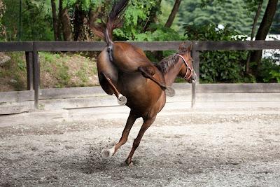 cavallo che sgroppa