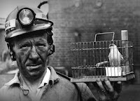 A picture in black and white of the kind of Canaries used in the coal mines.