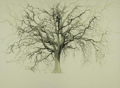 Alex Egan, Giant Oak