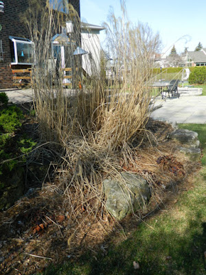 Toronto Etobicoke  spring garden cleanup before by Paul Jung Gardening Services Inc