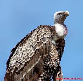 Pet Birds Name, Indian Birds Name, 10 Cute Birds Name
