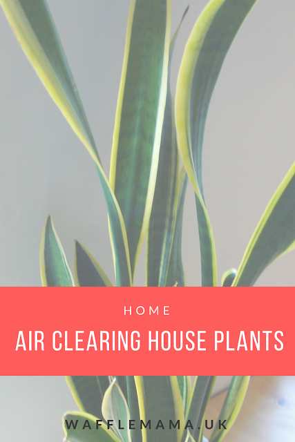 house plants purify air easy house plants cactus tips