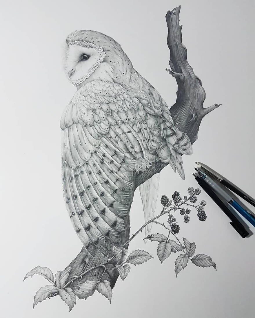 07-Barn-Owl-Kerry-Jane-Detailed-Black-and-White-Wildlife-Drawings-www-designstack-co